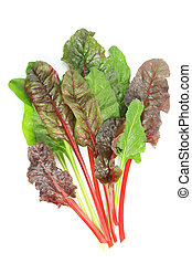 young chard leaves (Beta vulgaris subsp. vulgaris) isolated in front of white background