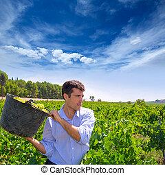 chardonnay harvesting with harvester farmer winemaker