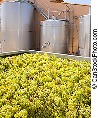 chardonnay winemaking with grapes and tanks - chardonnay...