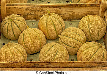 Charentais melons harvest festival in a wooden crate, ripe juicy little melon on the market. Harvesting vegetable