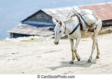 chargé, cheval, montagnes