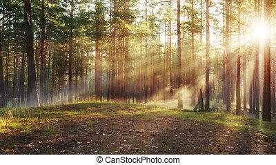 chariot, brumeux, mystique, mouvement, forêt, coucher soleil