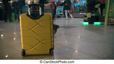 chariot, jaune, sac, aéroport, station, ferroviaire, ou