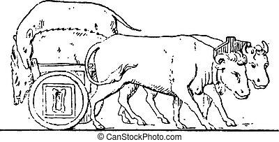 Chariot of Lazio, vintage engraving.