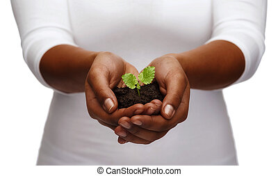 african american woman hands holding plant in soil -...