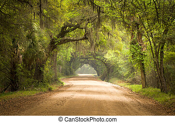 Charleston SC Dirt Road Forest Botany Bay Plantation Spanish Moss Edisto Island Deep South Live Oak Trees