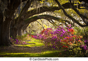 charleston, sc, plantation, vivant, chêne, arbres, mousse...