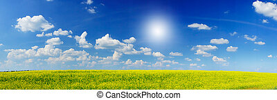 Wonderful panorama of rapefield and cloudscape.