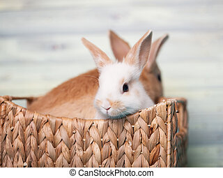 Charming baby bunnies in a basket