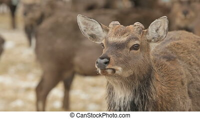 Charming deer - Close-up of a deer standing in front of the...