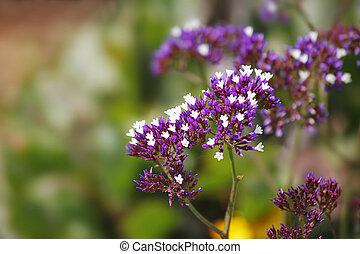 Charming fine field flowers on the blur