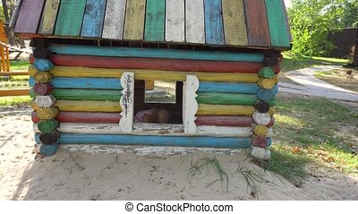 Charming girl in small wooden house - Adorable little girl...