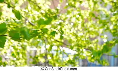 Charming green natural background with sunbeams through leaves in park on summer day. Focus on birch branch on foreground.