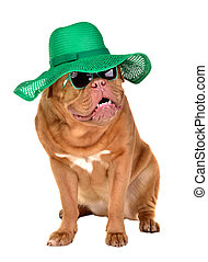 Charming lady dog wearing green straw hat and sun glasses