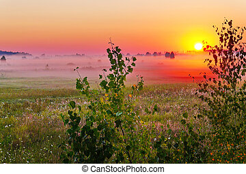 Charming sunset against the backdrop of a green misty evening field