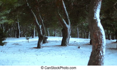 Winter forest covered in the snow
