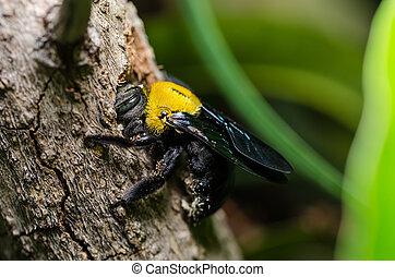 charpentier, nature, abeille