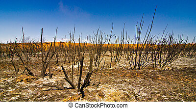 Charred Remains of Desert Shrubs after a Wildfire in Utah