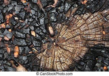 charred tree trunk