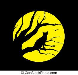 chat, à, lune