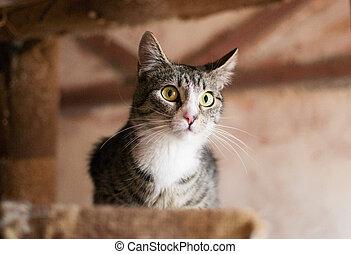 chat a rayé