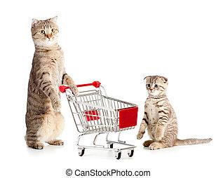 chat, achats, mère, charrette, chaton