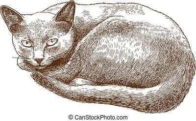 chat, antiquité, gravure, illustration