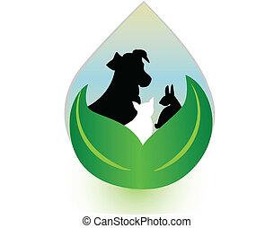 chat, baisse eau, lapin, chien