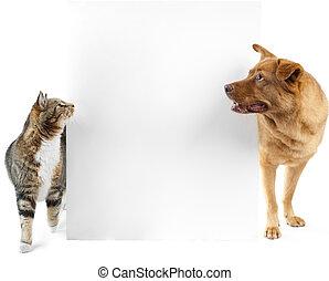 chat, bannière, chien, autour de