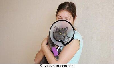 chat, beau, mouvement, patte, bandé, vétérinaire, collier, ...