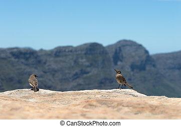 Chat Birds