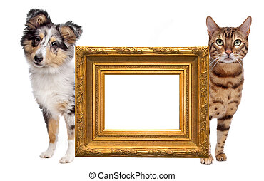 chat, côté, chien