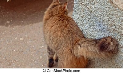 chat chat, sauvage, attente