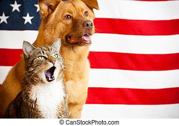 chat, chien, drapeau usa