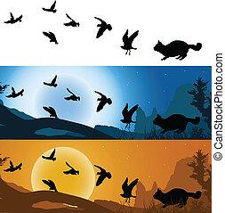 chat, coucher soleil, chasseur, oiseaux