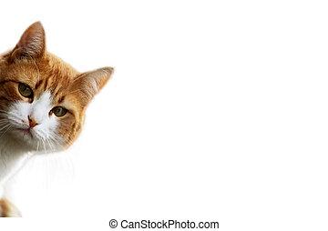 chat, curieux