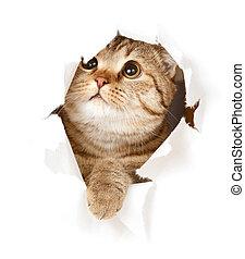 chat, dans, papier, trou