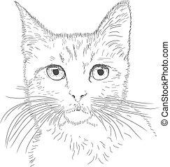 chat, dessin ligne