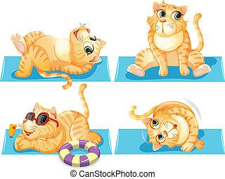chat, ensemble, délassant