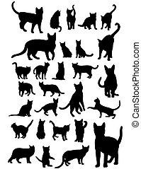 chat, ensemble, silhouettes