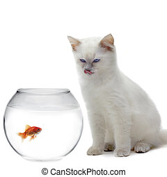 chat, et, a, poisson or
