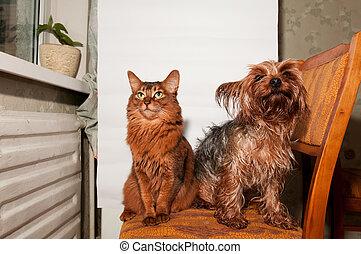 chat, et, chien, ensemble