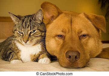 chat, et, chien