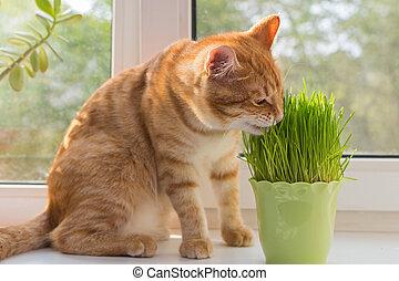 Images et photos de cataire 383 images et photographies libres de droits de cataire disponibles - Herbe a chat seche ...