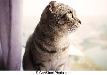 chat, fenêtre, séance, beau