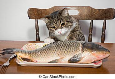 chat, grand poisson