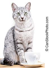 chat, grande tasse thé, blanc