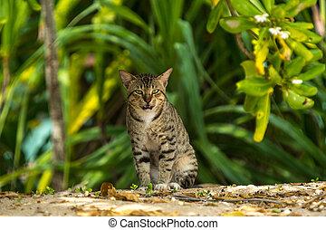 chat, haut, fond, séance, grand, fin, gris, vert, ouvert, animal, regarder, air