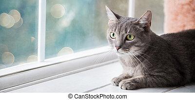 chat, home., décontracté, conjugal