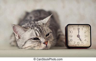 chat, horloge